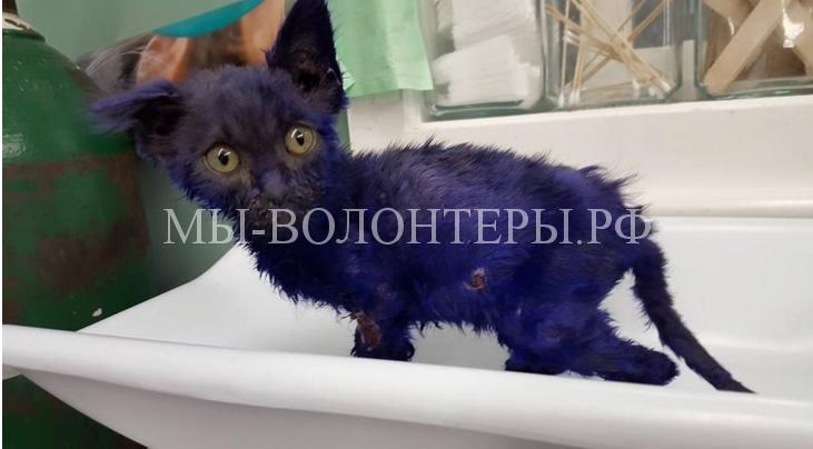Спасение котенка которого использовали как приманку для собак1