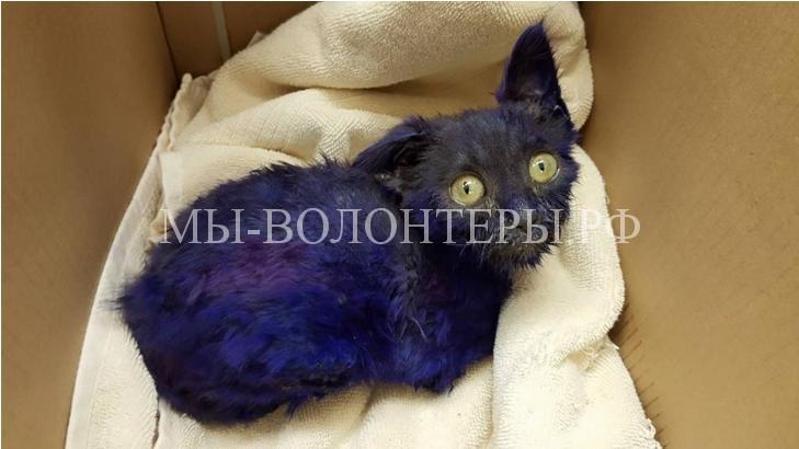 Спасение котенка которого использовали как приманку для собак4