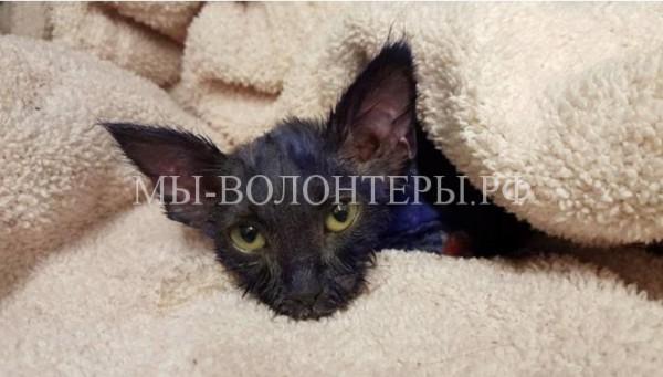 Спасение котенка, которого использовали как приманку для собак