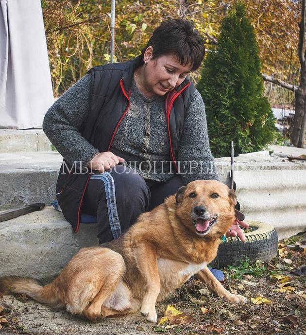 волгоградец снял фильм о бездомных животных2