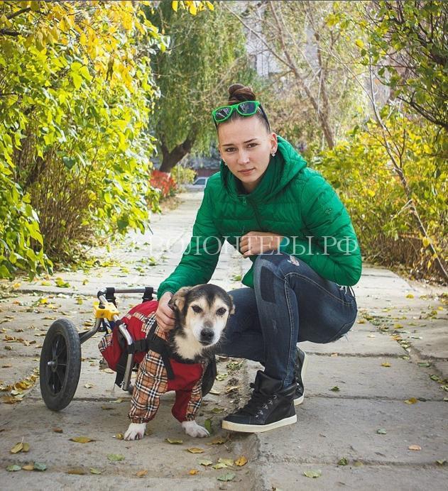 волгоградец снял фильм о бездомных животных3