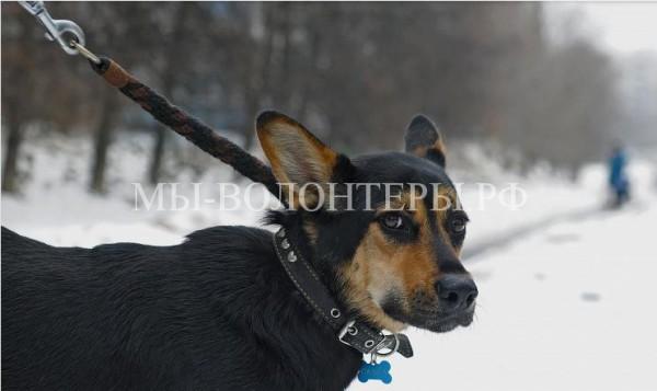 В Приморском крае запретят детям до 14 лет выгуливать собак без сопровождения взрослых