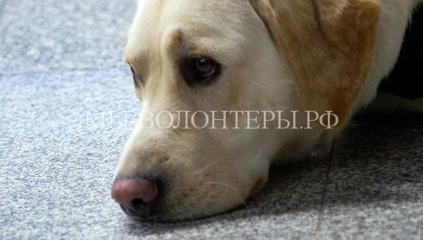 Собаки умеют распознавать эмоции на лицах и в голосах людей