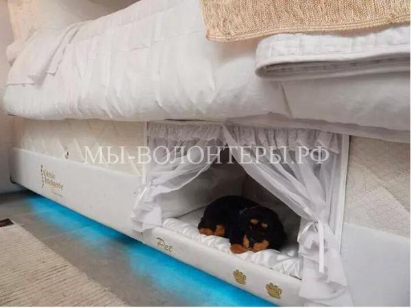 Кровать, на которой найдется место и вам, и вашему питомцу