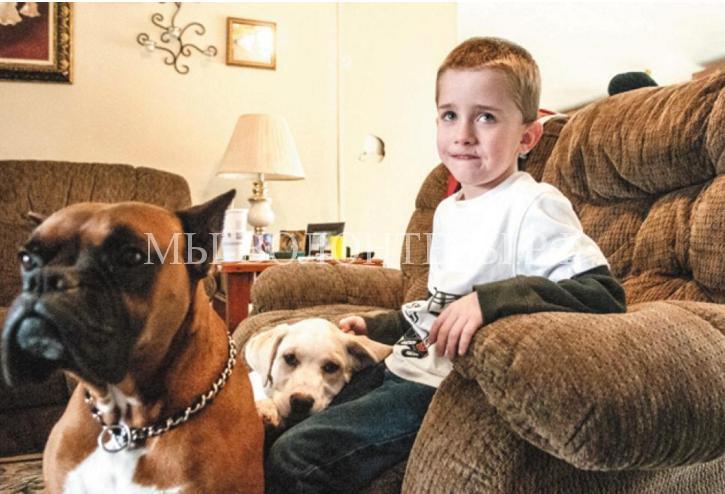 собаки-спасатели4