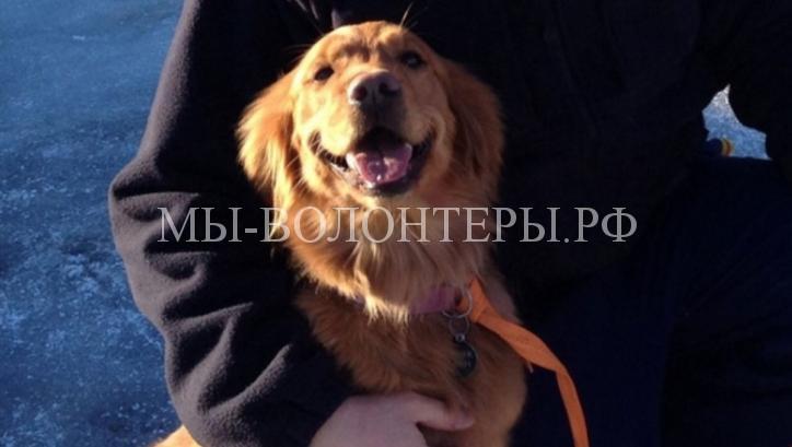 собаки-спасатели5
