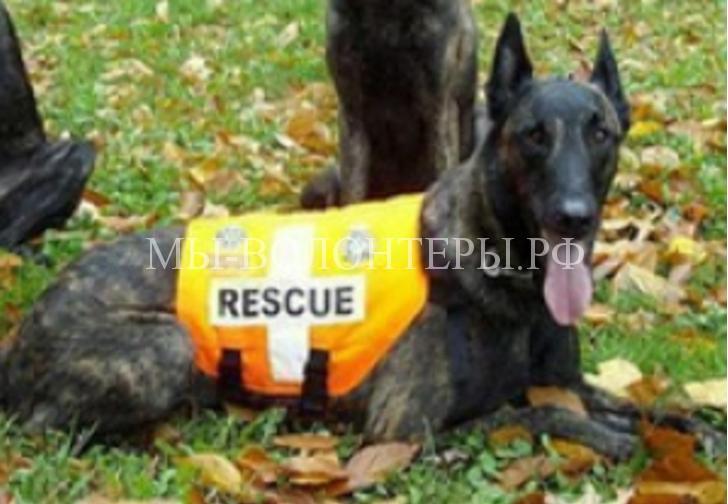 собаки-спасатели9