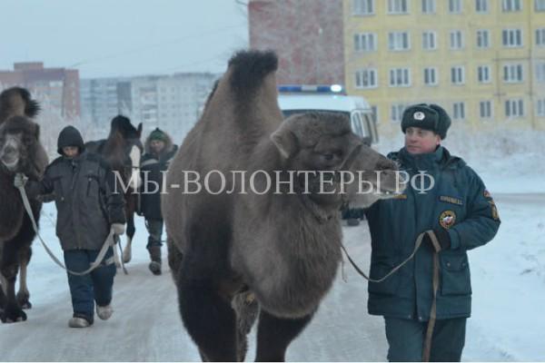 Брошенных на морозе цирковых животных выручили спасатели