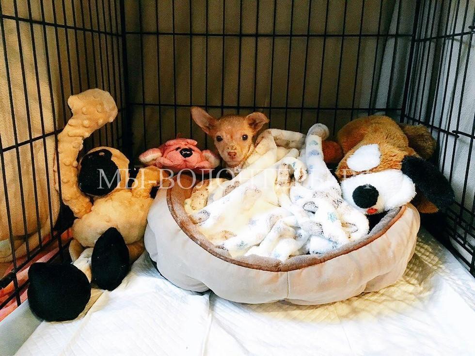 спасение лысого щенка из мусорного контейнера4