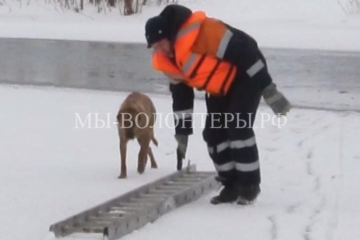 В Башкирии спасатели вытащили провалившуюся под лед собаку
