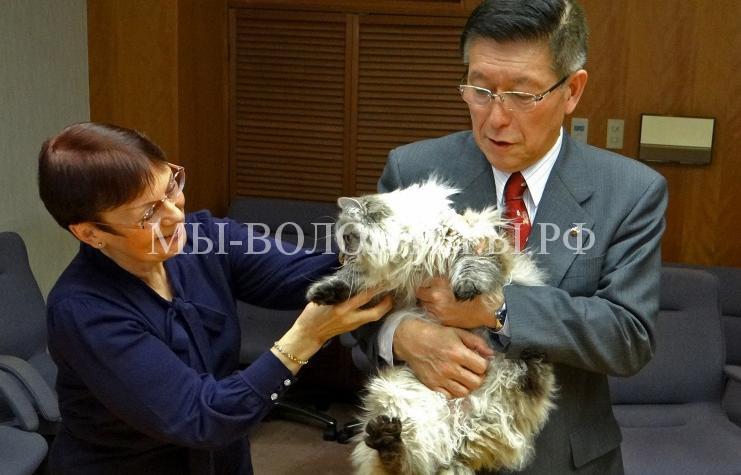 Японский губернатор, получивший кота в подарок от Путина, построит приют для животных