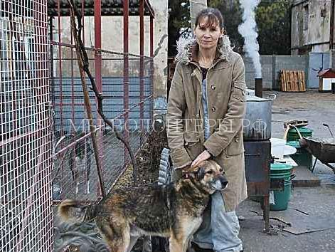 Безнадзорных животных в Евпатории отлавливают и сжигают — вот такое решение проблемы