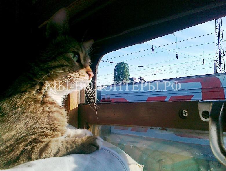В дорогу с котом без эксцессов1