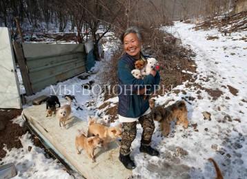 Женщина из Южной Кореи спасает собак на протяжении 26 лет
