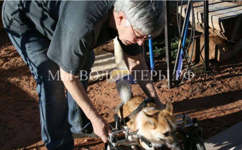 Карла Филлипс дарит кров, любовь и внимание собакам-инвалидам