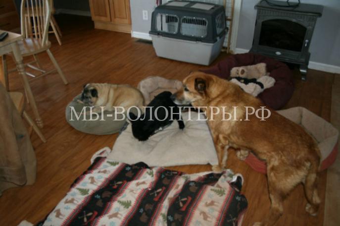 Женщина спасает и дает дом собакам-инвалидам 3