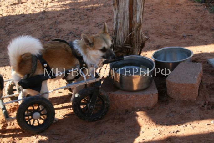 Женщина спасает и дает дом собакам-инвалидам 6