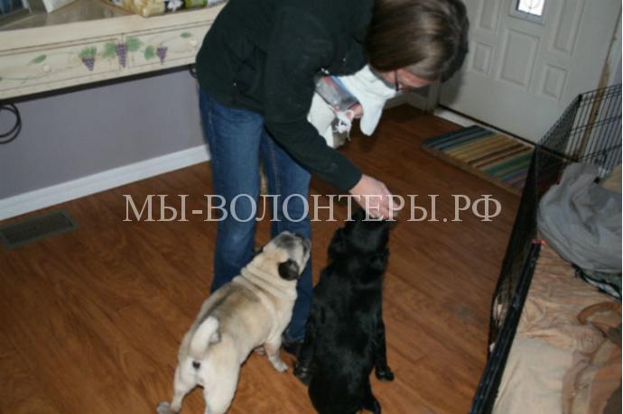 Женщина спасает и дает дом собакам-инвалидам2