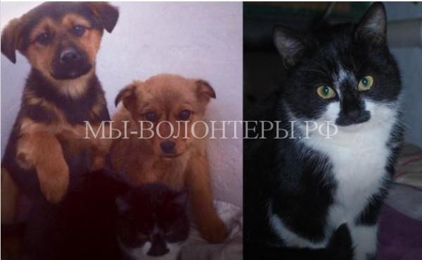 Кот помог выжить шестерым бездомным щенкам
