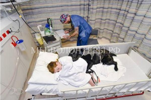 Мальчик находился в больнице вместе со своей собакой