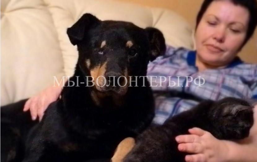 Неравнодушные жители Новосибирска довели до суда дело о жестоком избиении бездомного ротвейлера