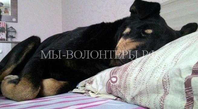 Неравнодушные жители Новосибирска довели до суда дело о жестоком избиении бездомного ротвейлера2