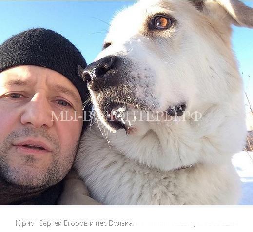Неравнодушные жители Новосибирска довели до суда дело о жестоком избиении бездомного ротвейлера4
