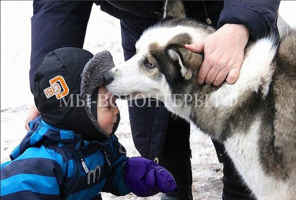Собаки породы «хаски» участвуют в реабилитационной программе для детей