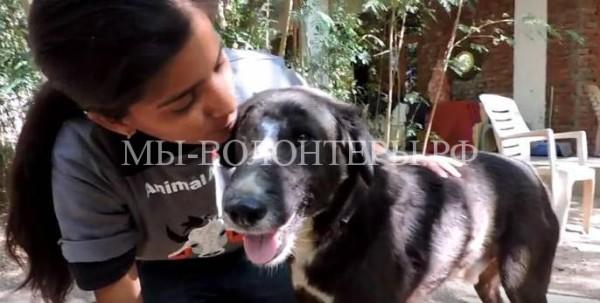 Спасение и лечение бездомной собаки с огромной открытой раной