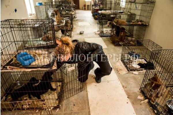 Спасение животных из закрытого приюта, владельцы которого арестованы за жестокое обращение с животными