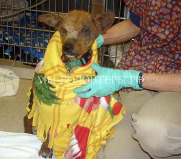 Спасение и лечение бездомной собаки, жившей в заброшенном автомобиле