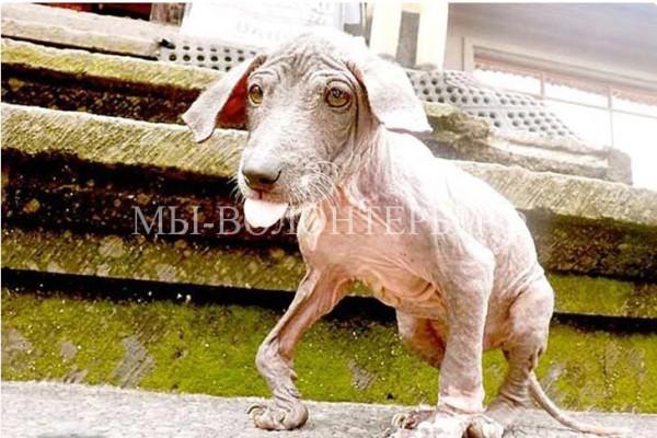 Фрэнки найден в канаве, малыш был лыс и истощен