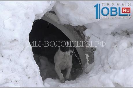 В Троицке спасли собаку, засыпанную горой снега