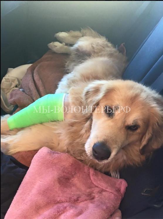 Спасение собаки, сбитой машиной5
