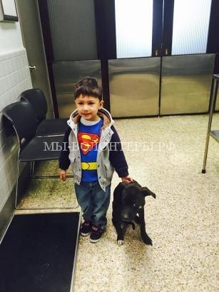 Спасение собаки с примерзшими лапами5