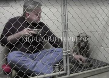 Чтобы спасти собаку, ветеринар ел вместе с ней в вольере