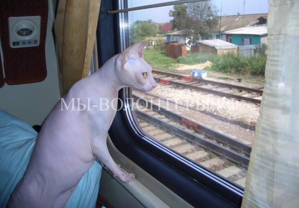 Как подготовиться к поездке с котом, чтобы она прошла без эксцессов