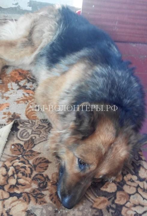 Собаку с 14 ножевыми ранениями бросили умирать на морозе, но волонтеры подобрали животное и вернули к жизни