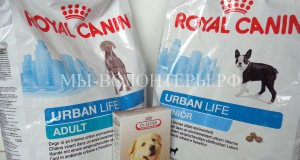 Спасибо зоомагазину «Зообудка» — за сухой корм и вкусное лакомство для собак
