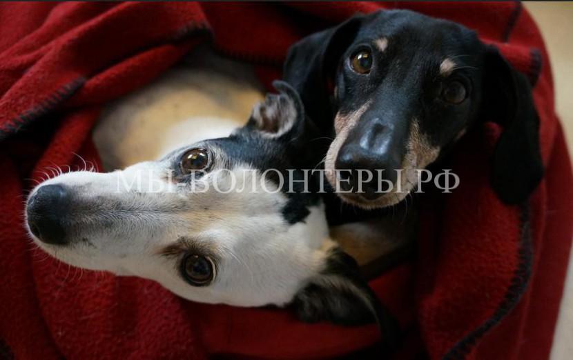 В России впервые появился ГОСТ по содержанию домашних животных