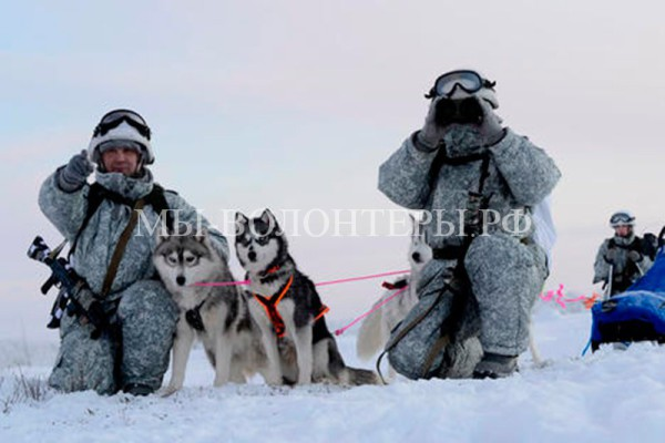Российские Вооруженные силы используют хаски для патрулирования Арктики