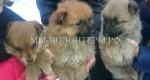 Крохам-щенкам срочно нужен дом и любящие хозяева
