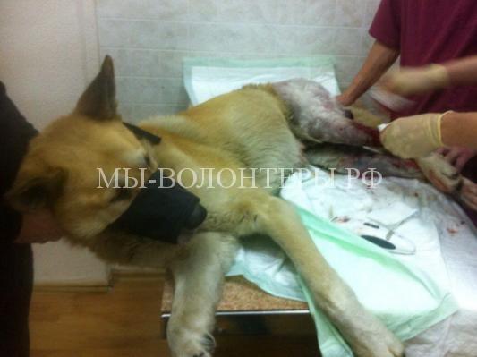 Бездомные дворняги помогли выжить раненой собаке2