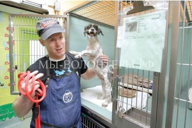 Грумер-волонтер стрижет приютских собак, чтобы помочь им быстрее найти семью