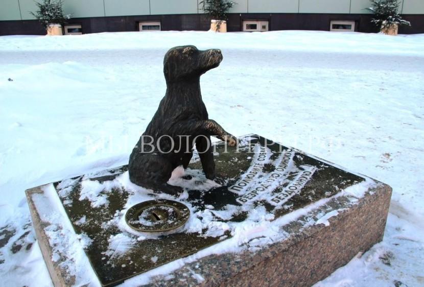 В Тюмени памятник брошенным собакам помогает бездомным животным