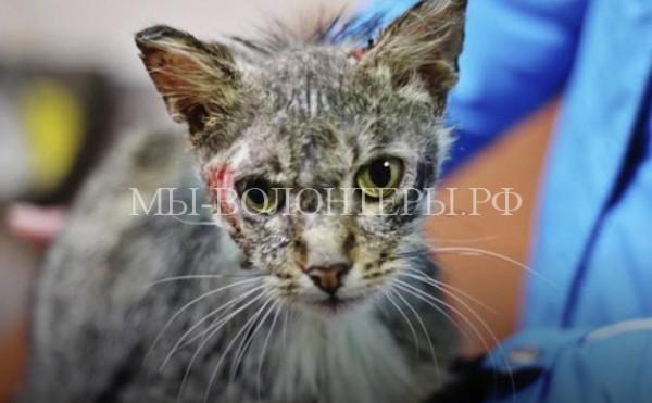 Кота, облитого кислотой спас прохожий. Теперь животное нуждается в длительном лечении
