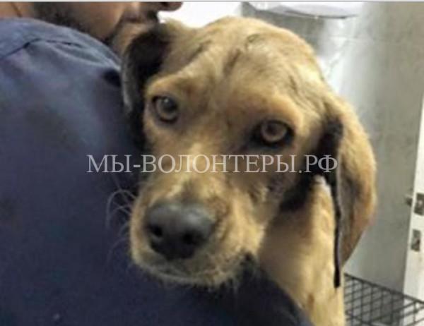 Эта собака узнала худший из человеческих пороков – жестокость