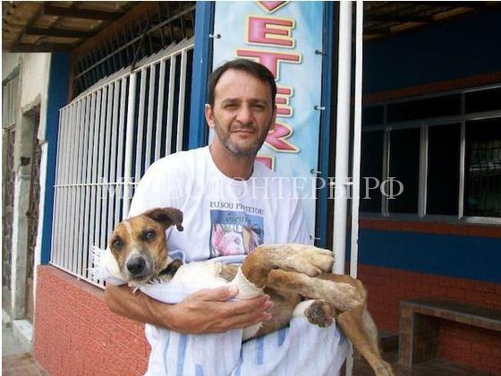 Спасение собаки с ранами и язвами10