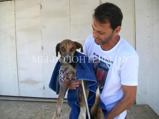 Спасение собаки с ранами и язвами1
