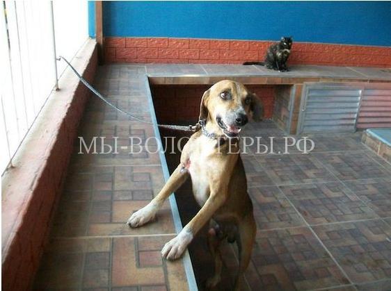 Спасение собаки с ранами и язвами14